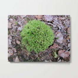 The Fairy's Futon Metal Print