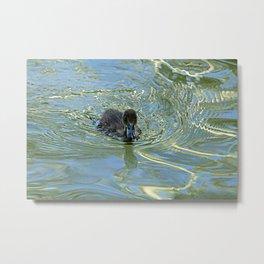 Little Black Duckling Swimming Metal Print
