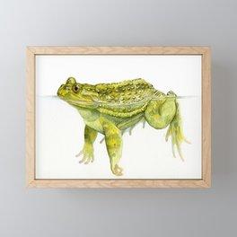 Helmeted Water Toad (Calyptocephallela gayi) Framed Mini Art Print