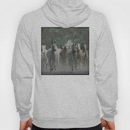 Arabian horses Hoody