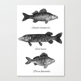 Zander, pike and perch Canvas Print
