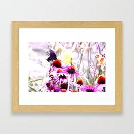 Apex Butterfly Framed Art Print