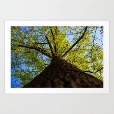 Upward to the canopy Art Print