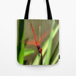 Beautiful Firecracker Dragonfly Tote Bag