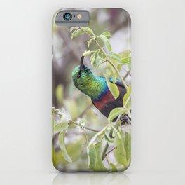 Marico Sunbird iPhone Case