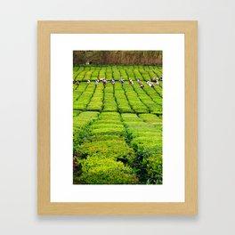 Porto Formoso tea gardens Framed Art Print