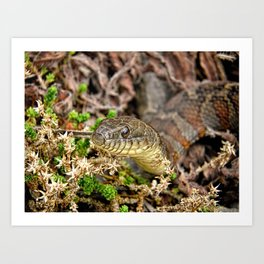 A Snake In The Moss Art Print