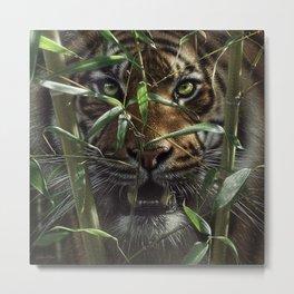 Tiger - Hungry Eyes Metal Print