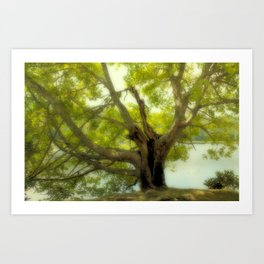 "Tree of Life "" Color"" Art Print"