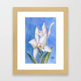 Vivid Orchid Framed Art Print
