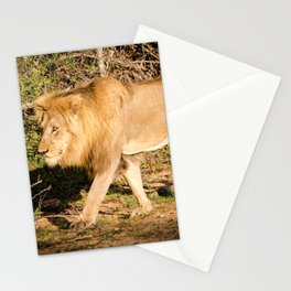 Male African Lion Stationery Cards