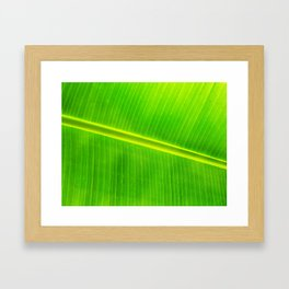 Banana Leaf Detail Framed Art Print