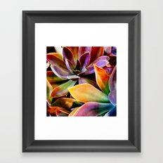 Spectacular Succulents Framed Art Print