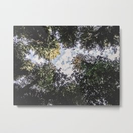 Wilderness Daylight | Photograph of the Blue Sky Dense Green Woodland Forest Tree Leaves Metal Print