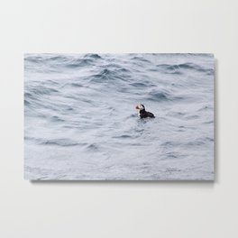Puffin Swim Metal Print