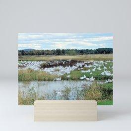 1001 Snow Geese Mini Art Print