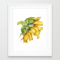 sunflower Framed Art Prints featuring Sunflower by Cindy Lou Bailey