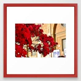 Flowers (Rome, Italy) Framed Art Print