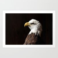 Bald Eagle in Profile Art Print