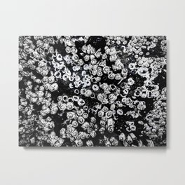 Black and White Barnacles Metal Print