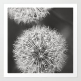 Dandelion Wishes Art Print