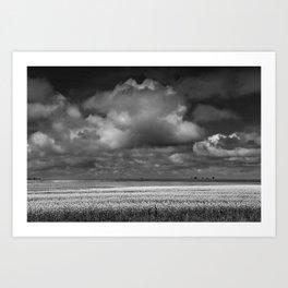 Black & White of a Canola Field by a Lake in Saskatchewan Art Print