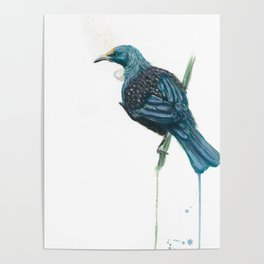 The Parson Bird aka Tui Poster