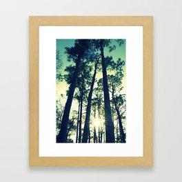 Towering Pines Framed Art Print