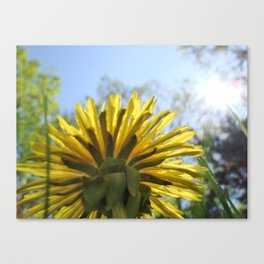 Summer Flower and Blue Sky Canvas Print