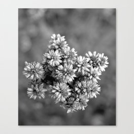 Black and White Floral Tiny Cobwebs on Flowers - Macro Close Up Canvas Print