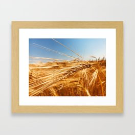 treasures of summer Framed Art Print