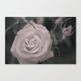 Raining Roses Canvas Print