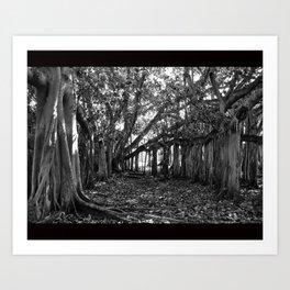 Everglades. Art Print