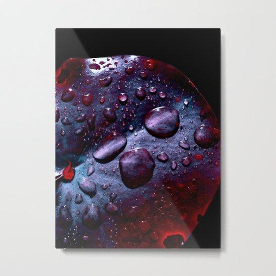 lily pad XIII Metal Print