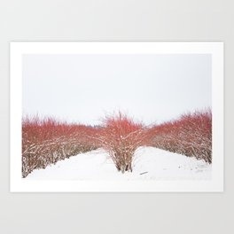 Field in the Snow Art Print