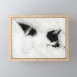 Sleeping cat Framed Mini Art Print