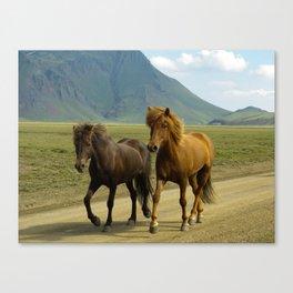 A Pair of Brown Icelandic Ponies Canvas Print