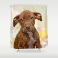pit bull Shower Curtains featuring Pit Bull  Mix Cutie Puppy for Adoption  by Peggy Volunteer Photographer  FOR RESCUE