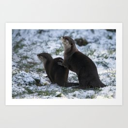 Otters In The Snow Art Print