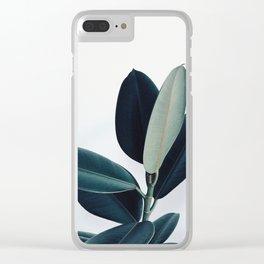 Ficus elastica - pale Clear iPhone Case