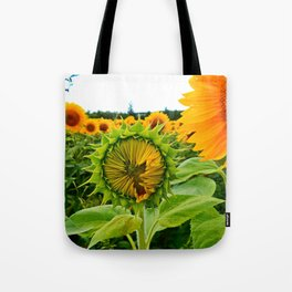 Sunflower Prepares to Unfold Itself Tote Bag