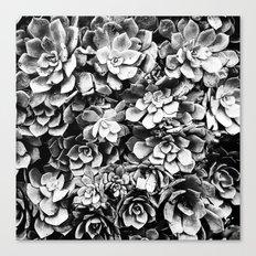 Black And White Plants Canvas Print
