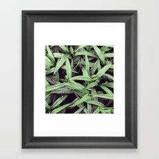 Green is the new black Framed Art Print
