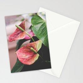 Laceleaf. Stationery Cards