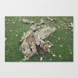 Olive Tree Trunk Canvas Print