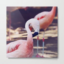 Folding Flamingo Metal Print