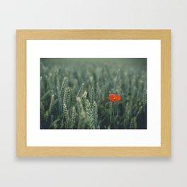 Scintilla Framed Art Print