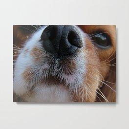 Nosey Dog Metal Print