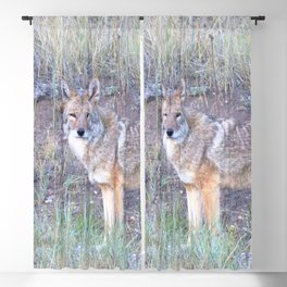 Watercolor Coyote 06, Leader of the Pack Blackout Curtain