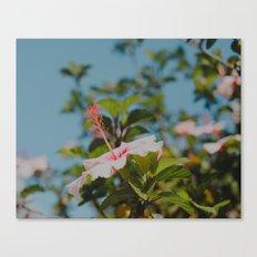 Soft Pink Hibiscus Canvas Print